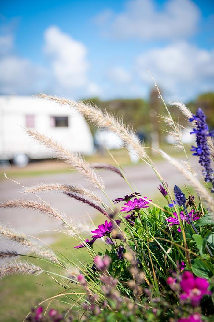 Mellbystrands camping
